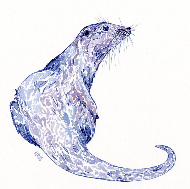 Drawn otter looking to the side in a violet-blueish colour